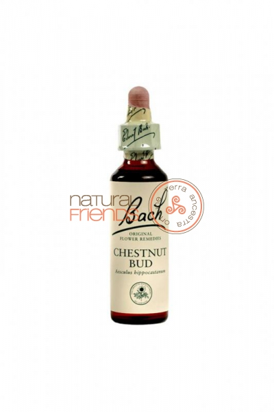 Chestnut Bud 20ml